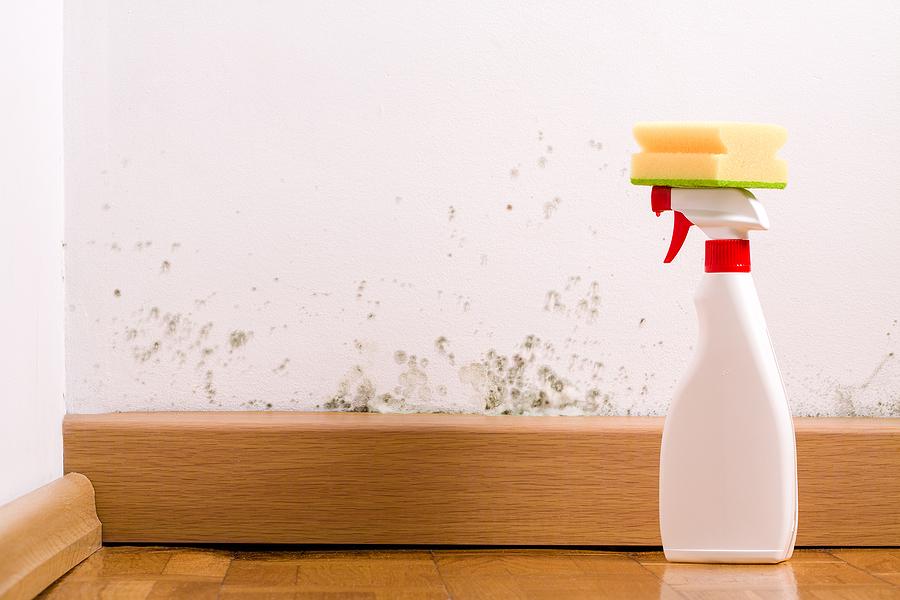 sprayer and a sponge